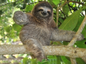 'm gonna woo you with my slothiness….and claws. And I'm not the tramp that one over there is.  Stop judging, okay?