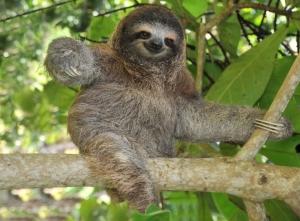 I'm not Human...I'm a Sloth.  But I'm still cool...