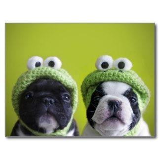 Pug froggies